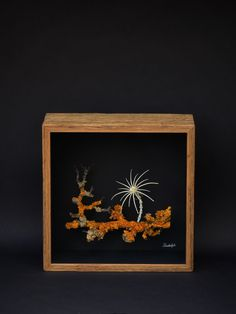 Wunderkammer Object, bones and wood, by Rudolph Bones, Contemporary Art, Wood, Frame, Decor, Botany, Objects, Art, Madeira