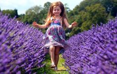 Mayfield lavender - Organic Lavender grown on the Surrey Downs.