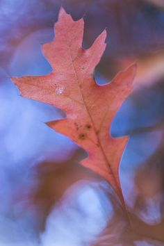 Une feuille dessine la nature  Macro photo by jerometetu41 http://rarme.com/?F9gZi