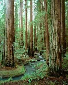 red woods eureka ca