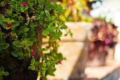 Colorful garden in Hotel Atitlan