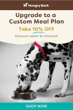 Premium Dog Food