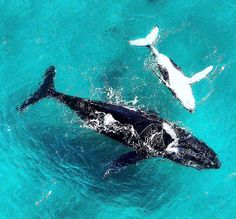 Even the whales are dropping in to Byron Bay #visitbyron
