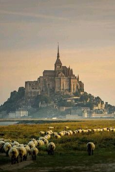 "cvllam: ""Le Mont Saint Michel en Normandie, France.  """