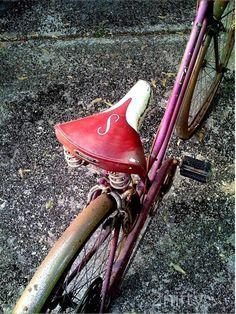 vintage magenta schwinn bicycle 8x10 photo
