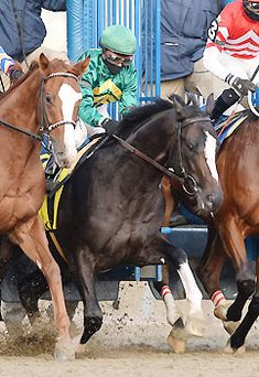 These are the most intriguing horses in the country as the sport heads into a new season.