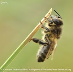 Stinging insects like bees send more than 500,000 people to the emergency room each year.