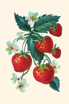 Strawberries and flowers. In the 1930's the classic homemaker could purchase decals, applied by water, to decorate the kitchen, furniture, or anything else they desired. These are samples directly fro