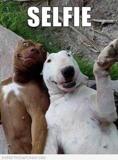 Healthy Mexican Casserole with Roasted Corn and Peppers - Funny Animal Quotes - - Selfie funny cute animals picture adorable dog lol funny animals The post Healthy Mexican Casserole with Roasted Corn and Peppers appeared first on Gag Dad. Funny Animal Jokes, Cute Funny Animals, Animal Memes, Funny Cute, Funny Dogs, Silly Dogs, Lol Funny, Animal Funnies, Smiling Dogs