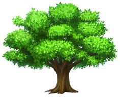 Image from http://science-all.com/images/tree-clipart/tree-clipart-05.png.