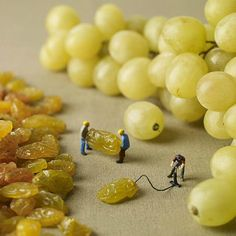 making grapes / via @Shelly Priebe & Correct.