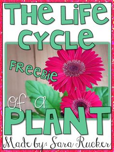 These FREE Plant Flap Books are from my Plant Life Cycle Unit found HERE!If you enjoy and use this freebie, please take the time to leave feedback! It's very much appreciated!Sara Rucker, Blossoming in First Grade First Grade Science, Kindergarten Science, Elementary Science, Teaching Science, Science Education, Journeys Kindergarten, Preschool, Student Teaching, Upper Elementary