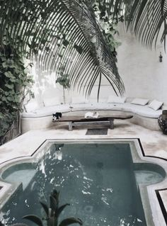 outdoor home ideas || pool + palm trees