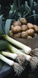 Long Live Leeks / Flavorful, versatile and extra-cold-hardy, this delicious vegetable belongs in every garden.