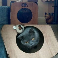 This gorgeous kitty is Ellie  she liked her name on her pod so much she licked it off  #cat #catsofinstagram #cats_of_instagram #catfurnature #catfurniture #catsinboxes #cattoy #INSTACAT_MEOWS #cutecat #PurrMachine #catsinboxes #catbox #Excellent_Cats #BestMeow #dailykittymail #thecatniptimes #catcube #catpod #ArchNemesis #FlyingArchNemesis #myindoorpaws #ififitsisits #cutecatcrew #catchalet #catnip #themeowdaily #kitty #dailykittymail #catgrass