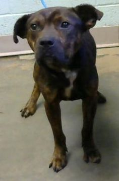 Chewy - URGENT - Dekalb County Animal Shelter in Decatur, Georgia - ADOPT OR…