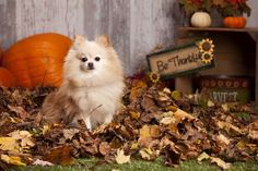 Let's Talk: Traveling With Your Dog for Thanksgiving | Top Dog Tips