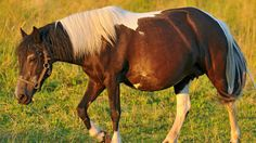 Guidelines for the Care of a Pregnant Mare