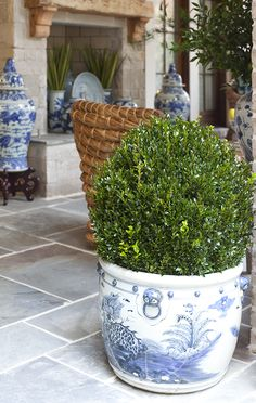 BOXWOODS & blue and white  Veranda design by Parker Kennedy Living