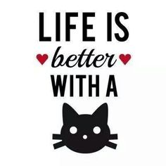 Life is better with a #cat ^..^ #kitty