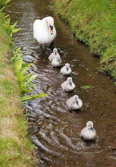 Anne ile sevimli yavrular