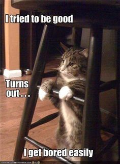 We have a cat like that, gets bored , opens all the doors both ways ...smartest cat we ever had.