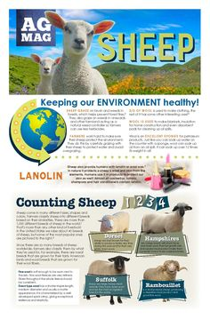 Sheep Ag Mag from American Farm Bureau Foundation Agriculture Facts, Our Environment, Sheep, Foundation, American, Twitter, School, Foundation Series