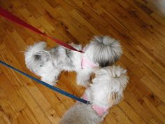 Luvs 2 Knit: Easy Dog Harness
