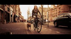 » One Day in Amsterdam - The dog loves it  Jeff Krol