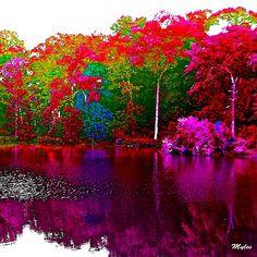 The Beautiful Trees By the Lake:Saundramylesart