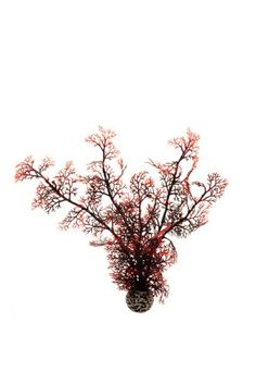 biOrb Sea Fan, Medium, Crimson Biorb http://www.amazon.co.uk/dp/B006M9FFLM/ref=cm_sw_r_pi_dp_VmwIwb0TV462Y