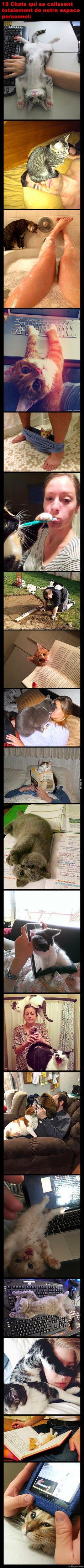 La preuve que les chats se calissent totalement d'entrer dans notre espace personnel:
