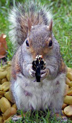 Considerations For Handgun Hunting   http://guncarrier.com/considerations-for-handgun-hunting/