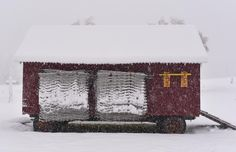 The egg mobile looks good under a blanket of white. I love how the snow accumulated on the electric fence netting!