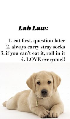 so true!! #allthingslab #labhq #labradorluv Labrador Quotes, Animals Beautiful, Cute Animals, Love Everyone, This Or That Questions, Projects, Cutest Animals, Blue Prints, Cute Funny Animals