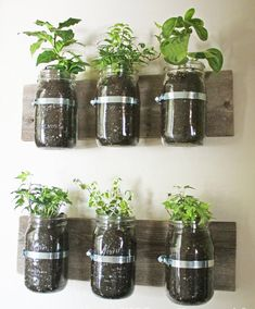 Much more practical and cheap herb garden idea!