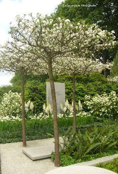 geen tuin zonder boom - bomen geven hoogte aan een tuin... - hoogteverschillen - materiaalgebruik - horizontale vs. verticale lijnen
