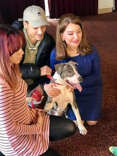 Apollo the Pit bull gets chew toys and a free doggy spa treatment for his brave act.