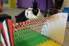 Canadian Rabbit Hopping Club: Rabbit agility course how-to