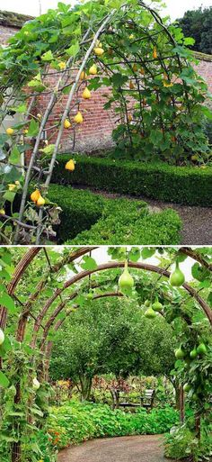 19 Successful Ways to Building DIY Trellis for Veggies and Fruits Build a Gourd Tunnel to Add Much Charm to a Garden Tomato Trellis, Diy Trellis, Garden Trellis, Veg Garden, Vegetable Garden Design, Garden Boxes, Garden Cafe, Indoor Garden, Raised Garden Bed Plans