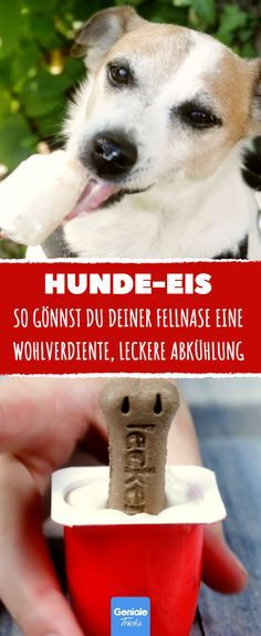 So you treat your fur nose to a well-deserved, tasty So gönnst du auch deiner Fellnase eine wohlverdiente, leckere Abkühlung. Delicious dog ice cream to cool down your fur nose - Dog Ice Cream, Life Hacks, Maila, Nutritious Meals, Summer Recipes, Animals And Pets, Dog Tags, Cute Dogs, Pots
