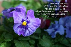 28 Best Springa New Beginning Images Spring Quotes Spring