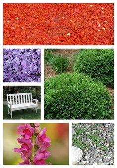 Planning a Shade Garden