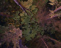 LSD by Benoit.P, via Flickr