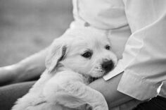 the puppy in someone lap