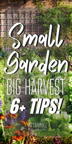 Small Garden Ideas: Get the Most Bang for your Buck! - These small garden ideas will help you get the most bang for your vegetable gardening buck! Harvest fresh produce even from your urban garden. Small Vegetable Gardens, Small Gardens, Vegetable Gardening, Gardening Zones, Veggie Gardens, Veg Garden, Garden Edging, Urban Gardening, Small Yard Veggie Garden Ideas