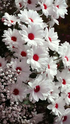 Floral   Flower   Wallpapers   iPhone   Android