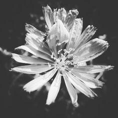 Black and White Flower Art Print by LydiaWhiteElk | Society6