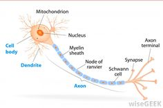 Pin 20.   What Is Myelination?   Pinned Time: 20140727 11:58, Taipei Time