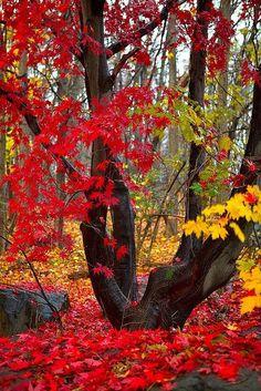 Crimson and Gold, New Hampshire photo via yvonne